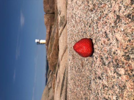 This is a photo of a strawberry on a cliff just outside Lysekil in Sweden.